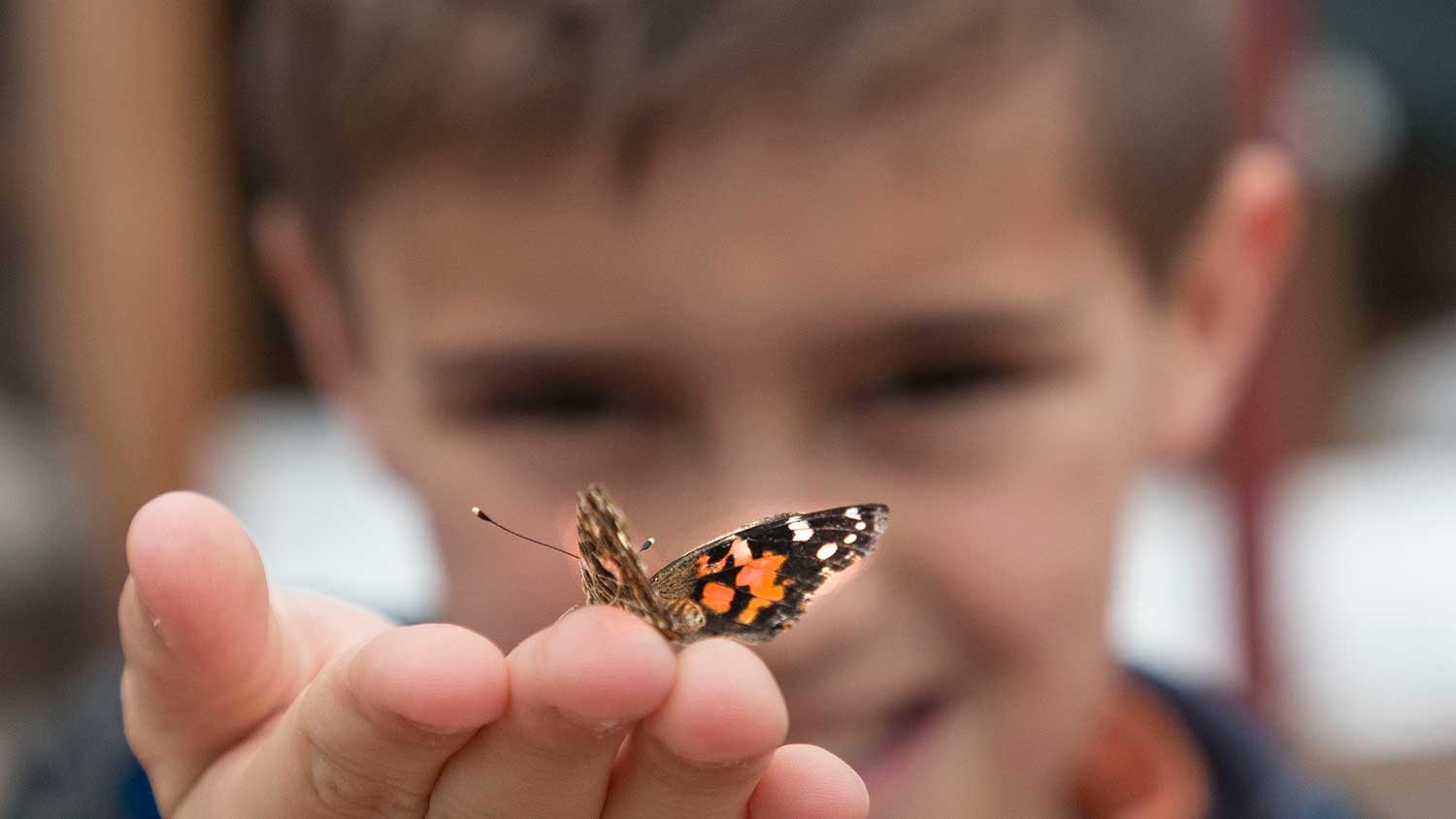 Young boy extending open hand towards camera, a buterfly posing on fingers
