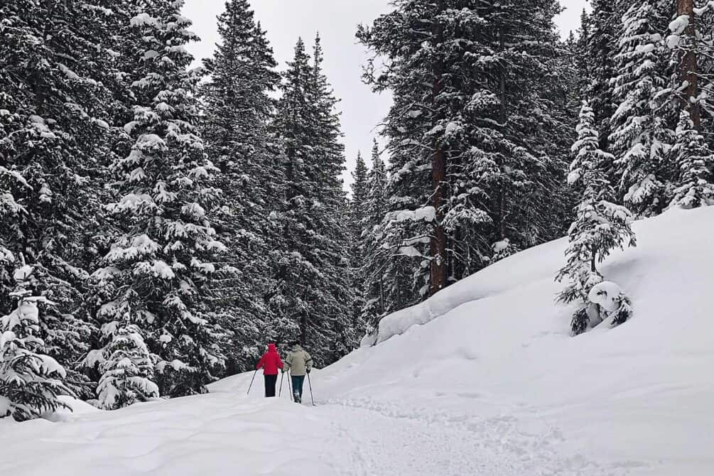 Two people country-skiing in trail surrounded by snow-covered pine trees
